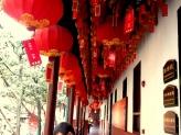 Felinare chinezesti